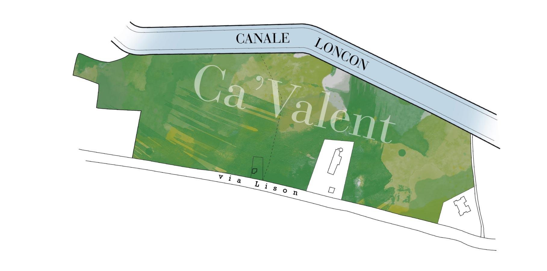 CAV-Vigna-04